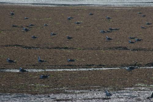 Чайковое поле