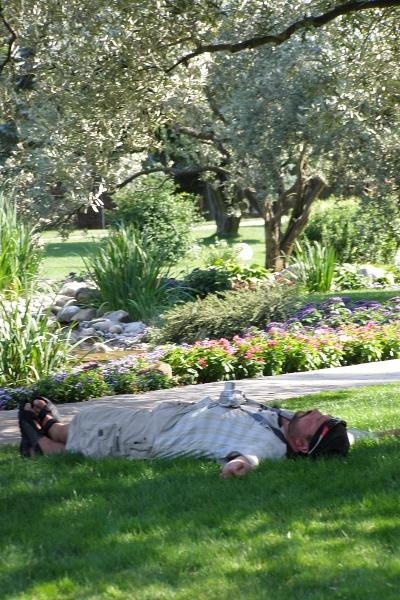 Тело Белого Собака под сенью оливковых деревьев в то время, как думы его - в Индии