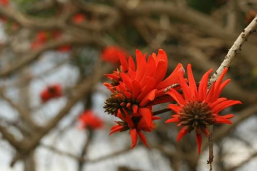 Цветы острова Пасхи