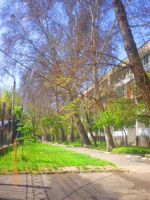 В парках сейчас зелено