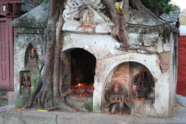 Храм-дерево