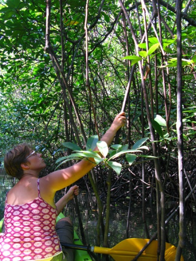 Мангровый лес и мы в нем