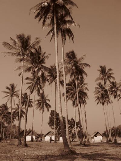Сбор кокосов