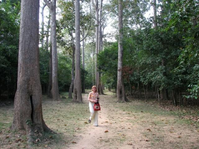Рощи вокруг Ангкор Вата