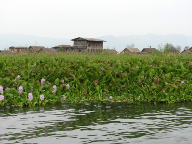 Флора озера