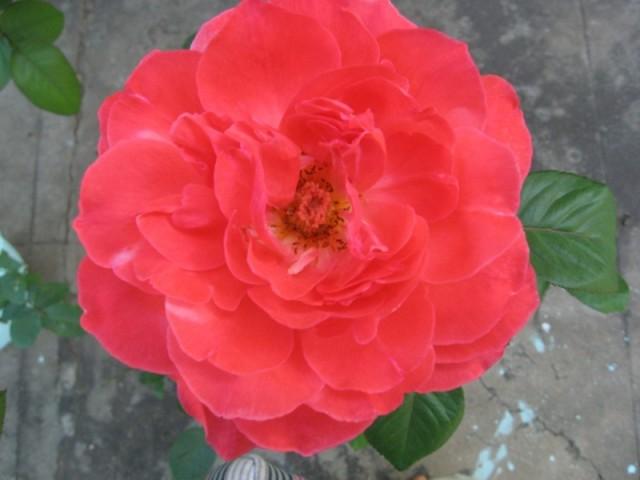 Флора Багана