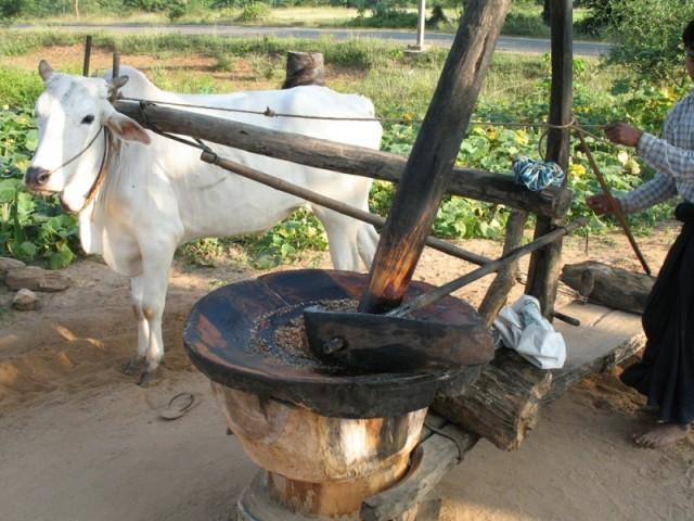 Производство арахисового масла