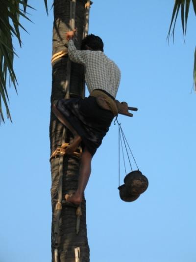 Добыча пальмового масла
