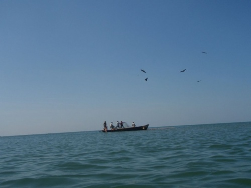 рыбаки и орлы над ними