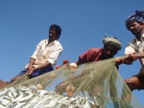 рыбаки тянут сеть