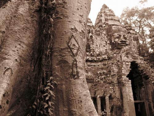 Знаки на дереве около северных ворот Ангкор Тома
