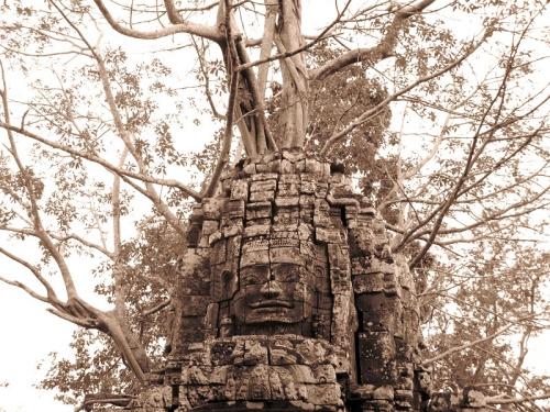 Лицо-дерево в храме Ta Som
