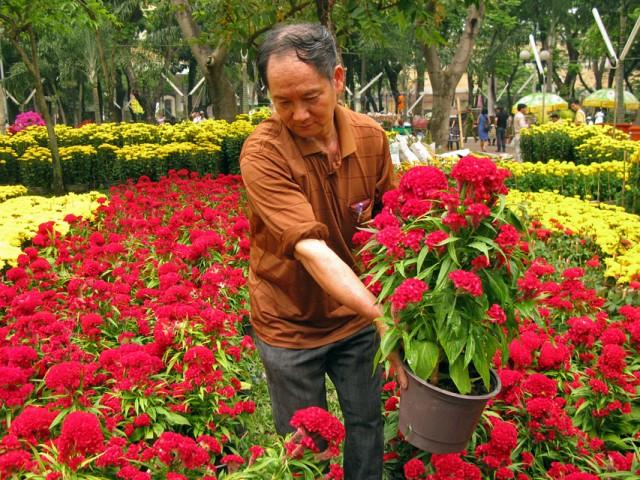 Новогодний цветочный рынок в Сайгоне