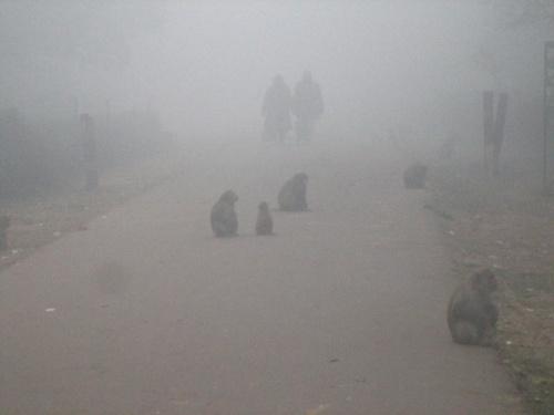 Агра. Туман.