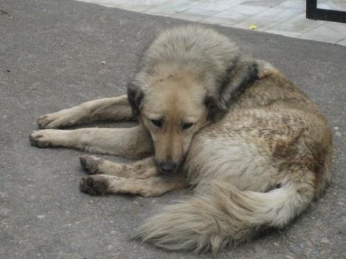 тока не поняла, почему собака такая грустная в раю...