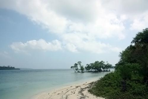 Одинокие мангровые заросли