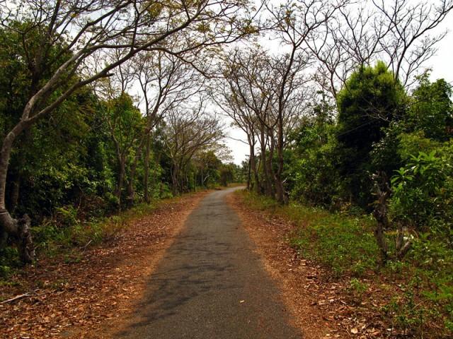 Асфальтовая дорога неизвестно куда