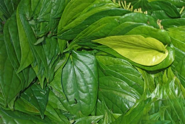 эти листья тут все жуют, смазывая какой то дрянью....даже делийские студенты..
