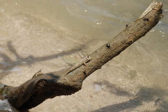 на острове живут такие существа.. скачут и сушатся на деревьях...