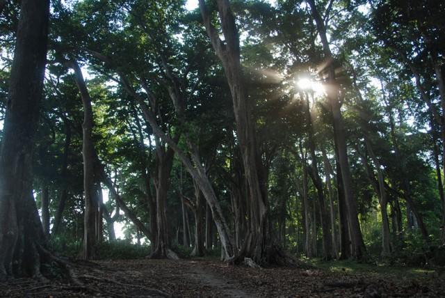 эт жары можно укрыться в зачарованном лесу, где падают с деревьев какие то личинки....