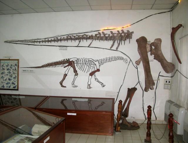 Экспозиция в Музее динозавров. Саваннакет