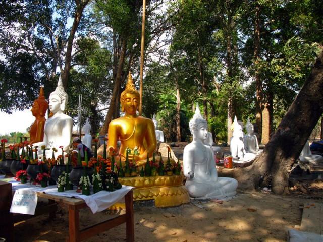 Новоиспеченные Будды