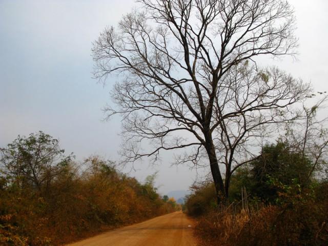 Дорога в пещеру Будды. Лаос