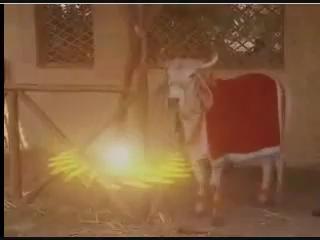 А корова его - чакрою!