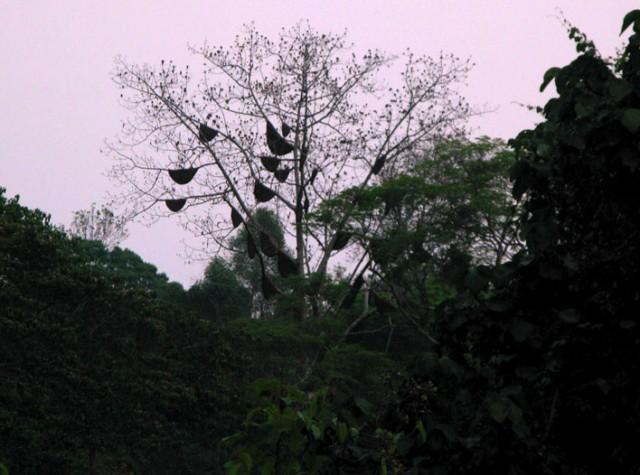 Сумерки. Дерево. Улья. Пчелиный гул