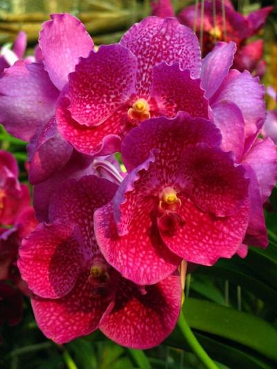 На дорогах Таиланда встречаются цветочные лавки с орхидеями и прочими чудесами