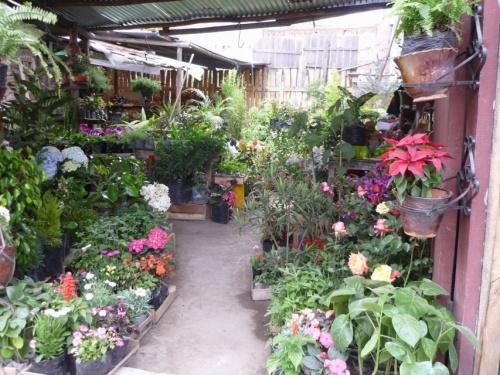 Эквадор - страна цветов
