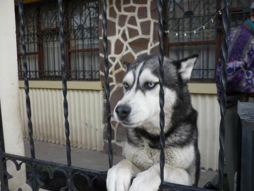 редкой красоты собаки