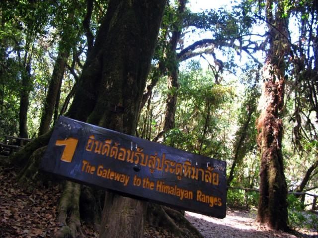Дои Интанон - ворота в Гималаи