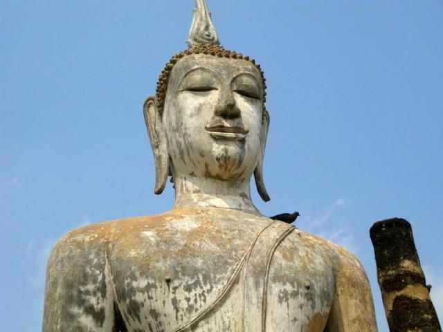 Будда и тот самый голубь