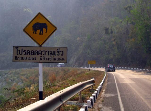 Внимание: слоны!