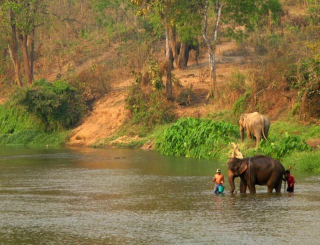 Слоновья ванна
