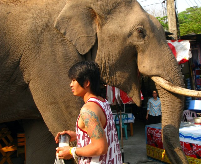 По сувенирному базару ходит слон в надежде поживиться бананами