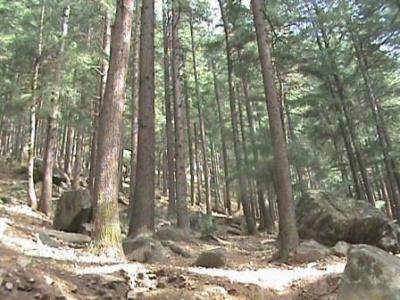 Лес по дороге.