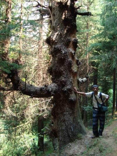 Дерево с локалом каким то