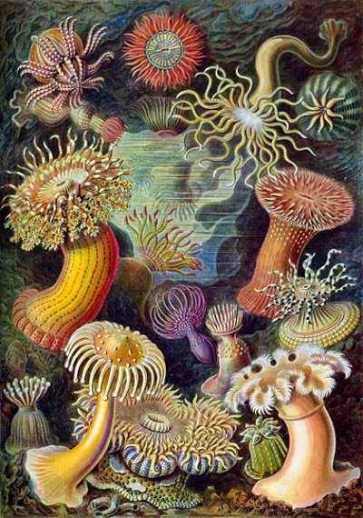 Актинии (Морские цветы)