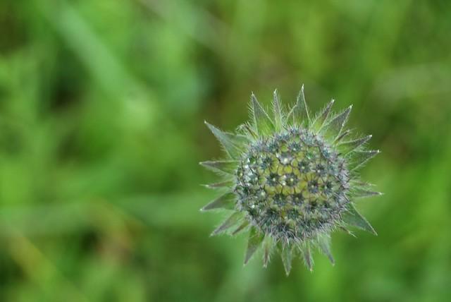 цветок из подмосковного леса