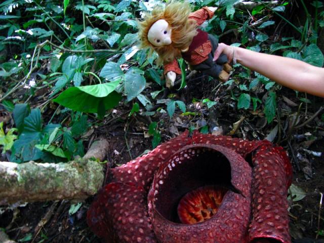 Игра в пчелку в индонезийских джунглях