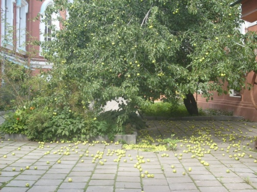 Яблонепад  во  дворике  Театрального  музея .
