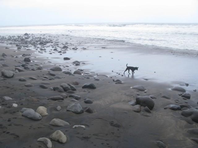 Морская собака