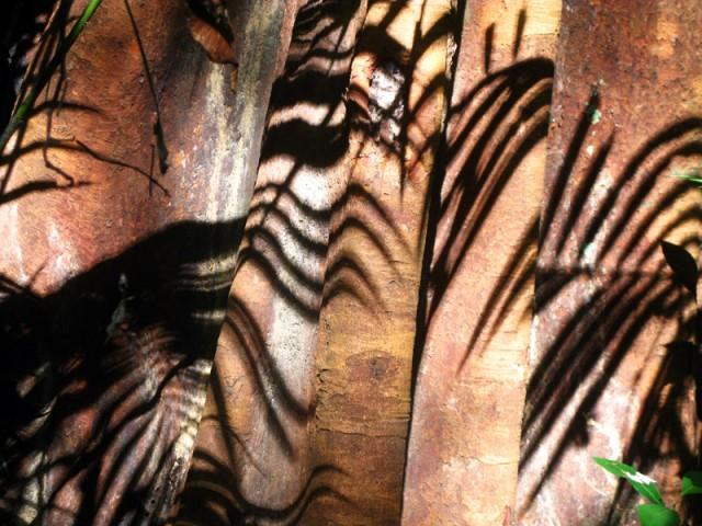 Призрак тигра