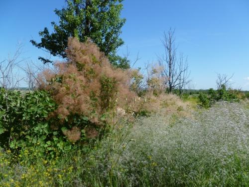 удивительные деревья и травы