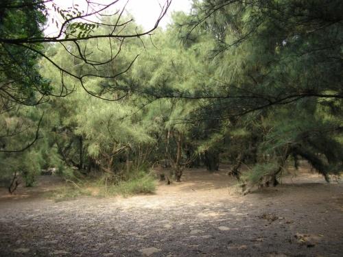 Сосоновый лес