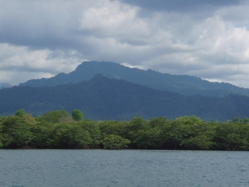 Мангровые заросли - отплываем от Бали