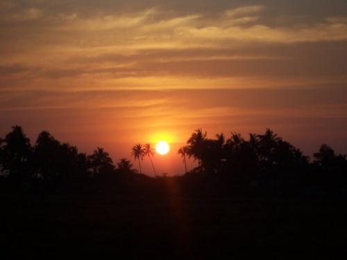 влюбленные пальмы. это Ашвем бич