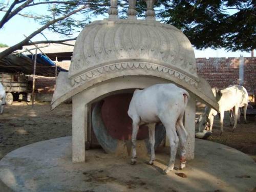 Здесь похоронен  Бык-Кришна